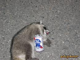 Drunk Raccoon 2