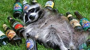 Drunk Raccoon 3