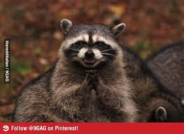Drunk Raccoon 5
