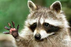 Ninwashui Raccoon Five Fingers