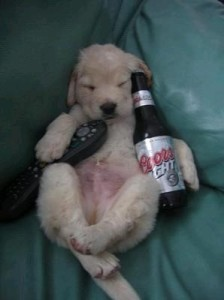 Drunk puppy Hypefox says...