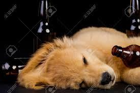 inebriated puppy